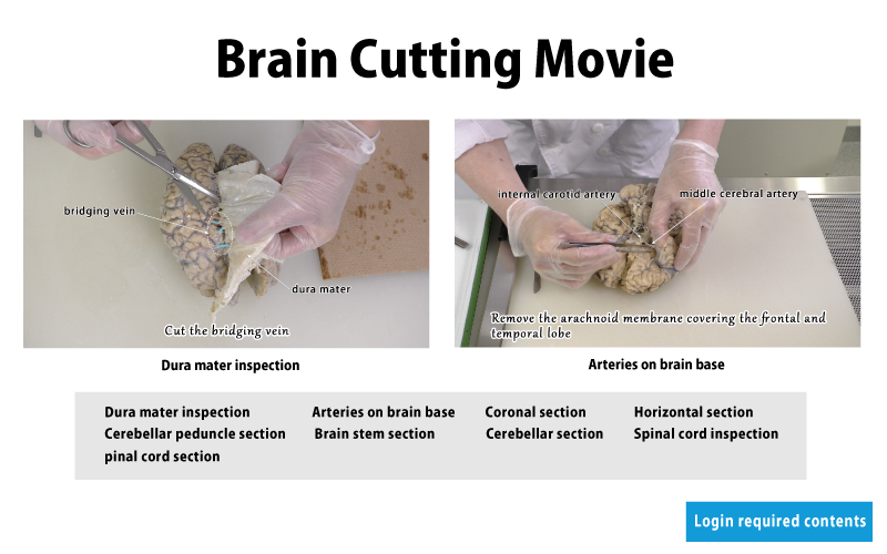 brain cutting movie